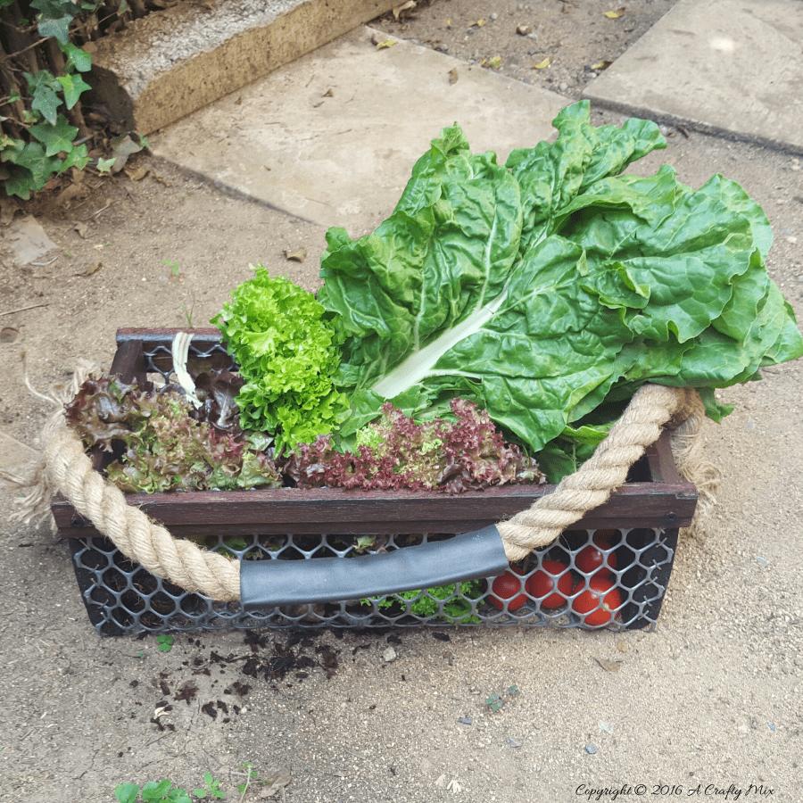 Featured image - harvesting basket
