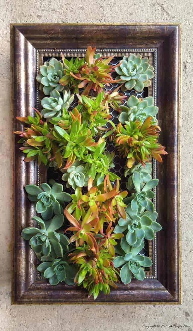 Re-purpose an old plastic picture frame and create a beautiful vertical garden. Perfect for small spaces