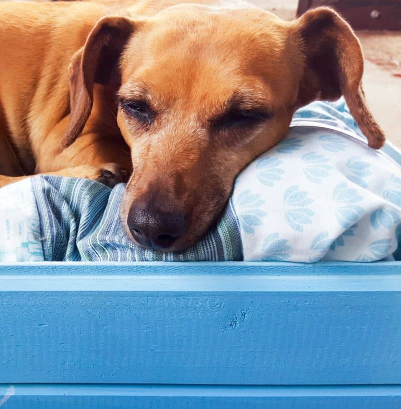 How to make a pool noodle bed for your fur baby. Easy tutorial. #PoolNoodle #PetBed #ACraftyMix #Repurpose