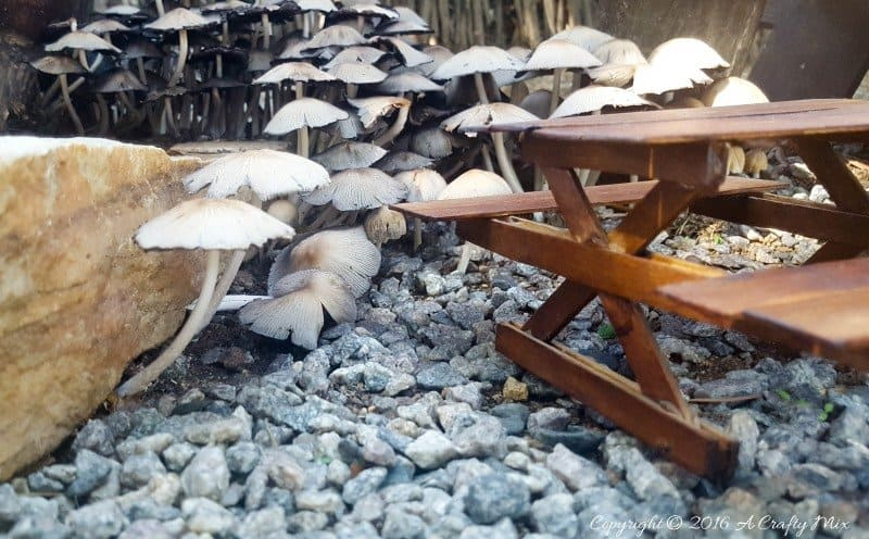 Magical fairy mushrooms and tiny picnic table