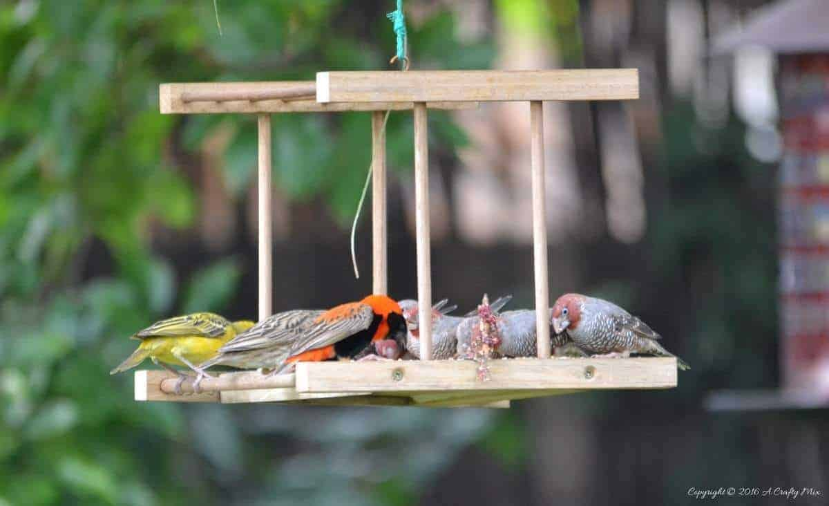 The bird life in our South African garden
