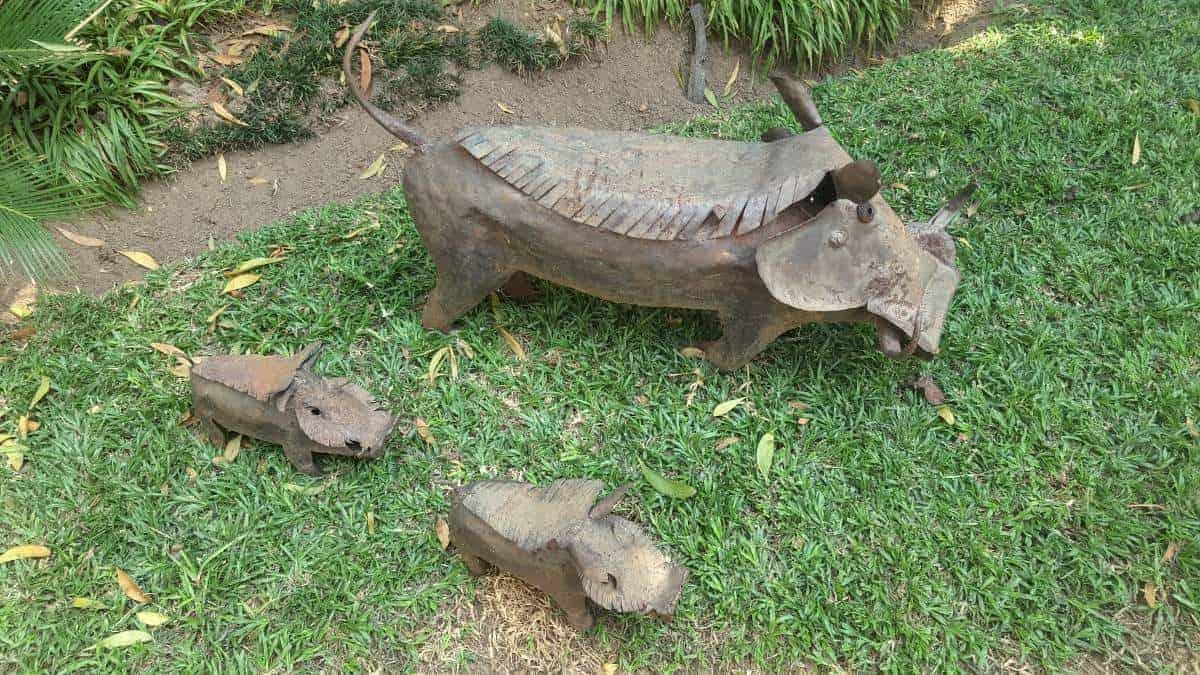 Vlakvarkie family in a South African garden