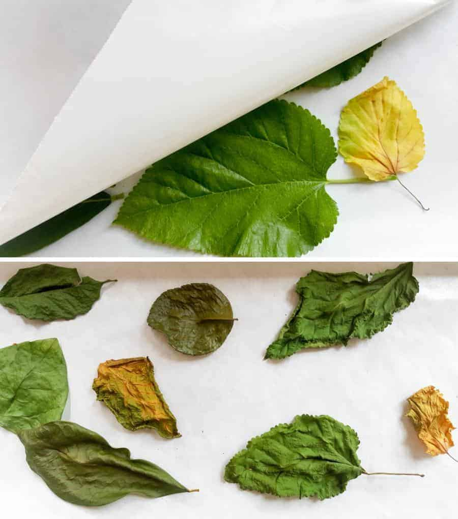 To dry the leaves place them bewteen two layers of wax paper #FairyBowls #FairyDIYCrafts #ACraftyMix #FairyGardens #FairyCRafts #WhimsicalFairyCrafts #SimpleFairyCrafts