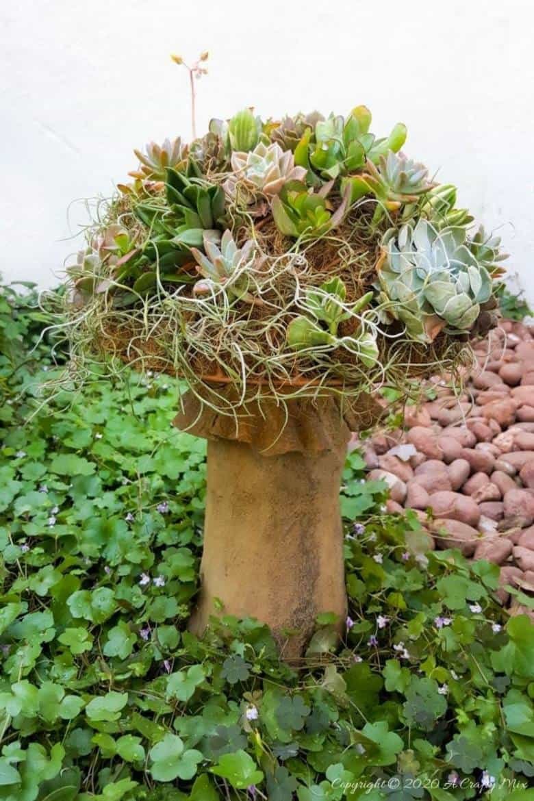 This living succulent mushroom planter is much easier to make than you might think. It takes a little time, but once those succulents take root and start spreading it puts on such a gorgeous display. #Succulentplanter #uniqueplanter #ACraftyMix #PlanterIdeas