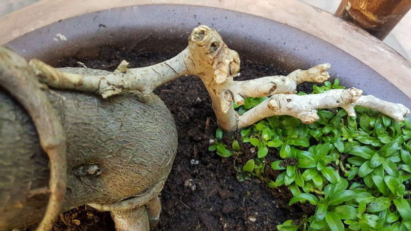 When planning a fairy garden, it's always a good idea to add the hard landscaping first