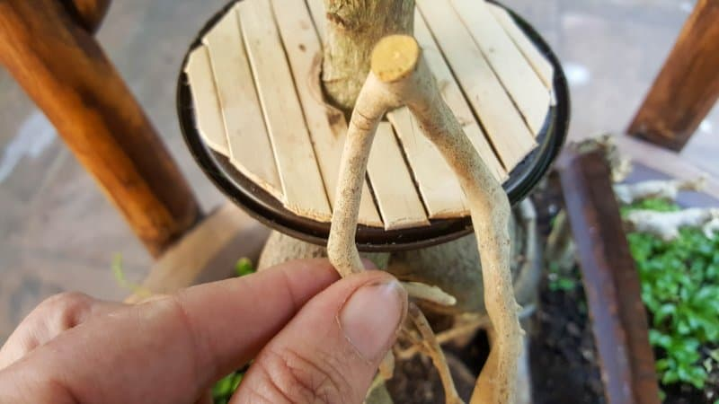 An interesting twig makes a beautiful door for the fairy fort