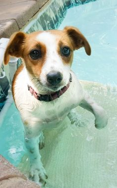 DIY Dog Pool Ramp – Don't Let Them Drown