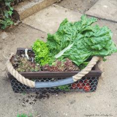 Easy DIY Harvesting Basket