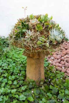 How to Make a Gorgeous Succulent Mushroom Planter